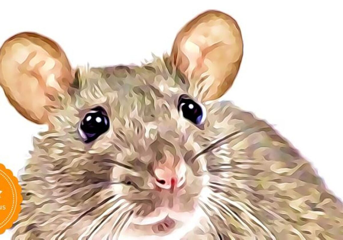 Air India Flight Delayed 12 Hours Because Of Rat